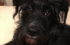 Hund Alois Entlaufen Unfall Treffen