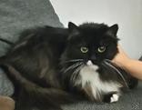 Katze Koko