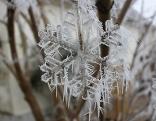 Winter, Schneeflocke