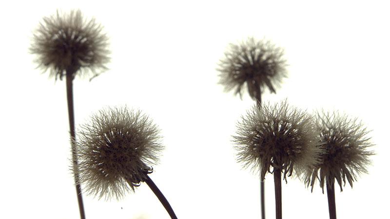 Hängende Gärten Getrocknete Blumen