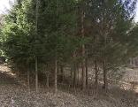 Waldbewirtschaftung Waldverband Thernberg