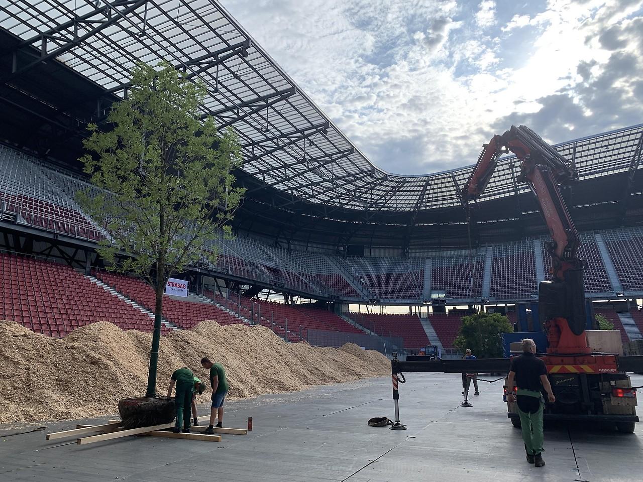 Baume Ziehen In Klagenfurter Stadion Ein Kaernten Orf At