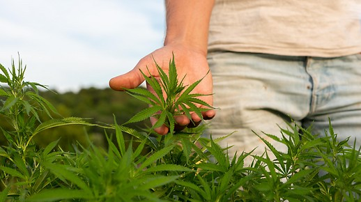 Polizei gegen Cannabis-Legalisierung - steiermark.ORF.at