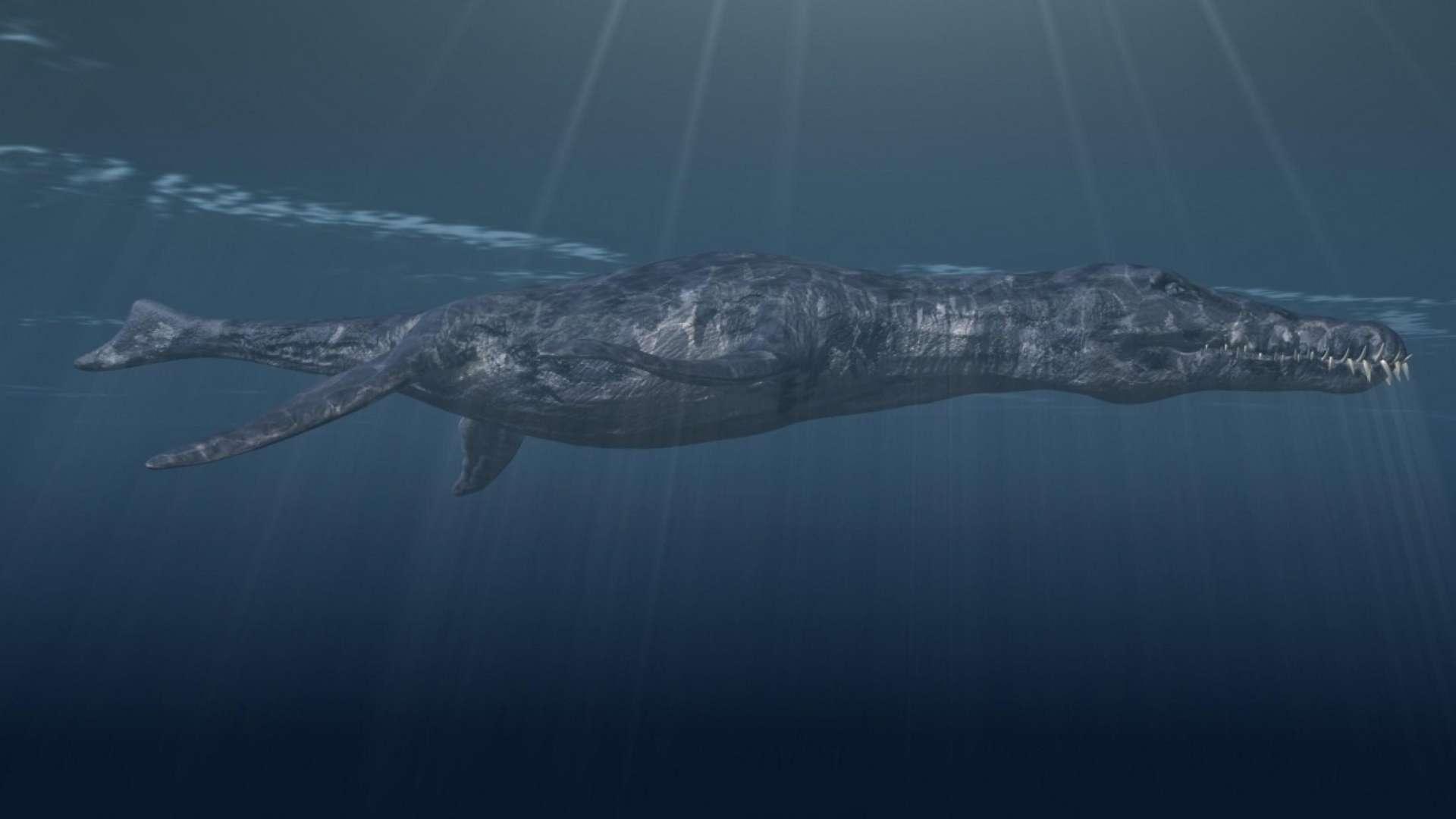 WISSENSCHAFT: Erster Pliosaurier in Österreich entdeckt
