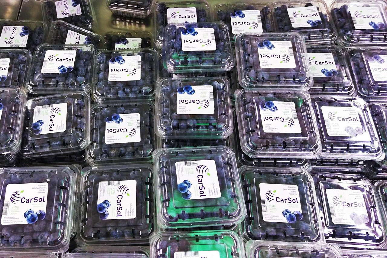 Blueberries packed in plastic containers