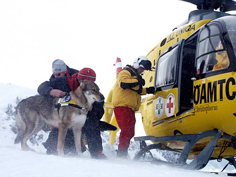 Lawinenhunde der Bergrettung werden in Hubschrauber verladen.