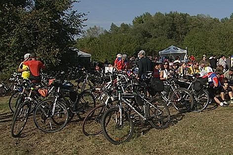 Radfahrer in der Wiese an der March