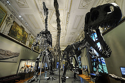 Dinosaurier-Saal im NHM