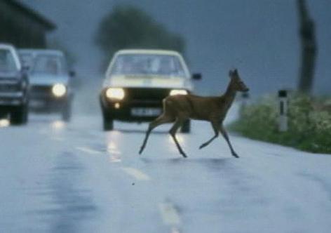 Wild wechselt die Straße