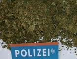 Cannabis, Marihuana