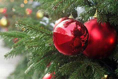 Bis Wann Bleibt Der Weihnachtsbaum Stehen.So Bleibt Der Christbaum Lange Frisch Radio Wien