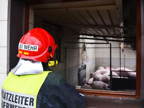 Brand in Schweinezuchtbetrieb