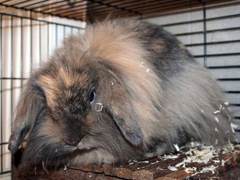 Auch dieses Kaninchen wurde ins Landestierheim gebracht