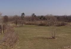 grüne Flächen