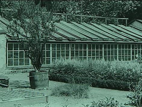 archivaufnahme botanischer garten