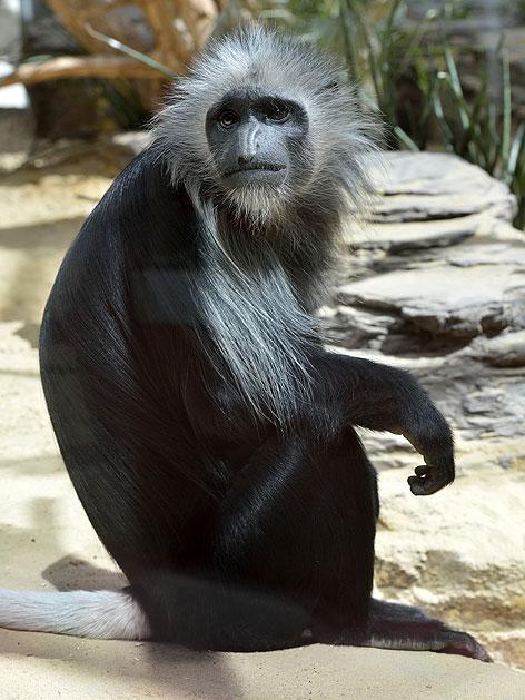 Neues Zuhause Fur Affen Wien Orf At