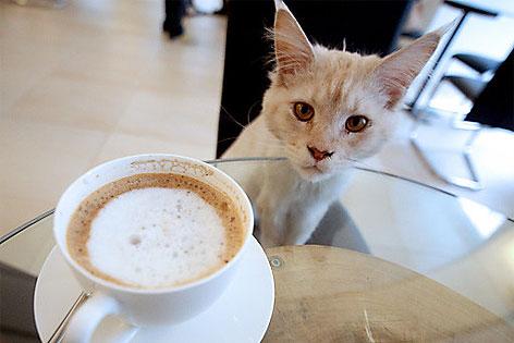 Katze im Katzenkaffee