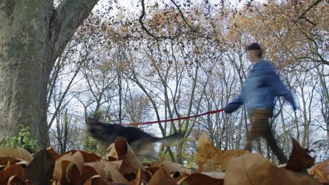 Frau und Hund im Wald