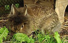Kater und Kaninchen