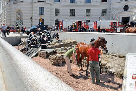 Pferd stürzte in Ausgrabungsstätte