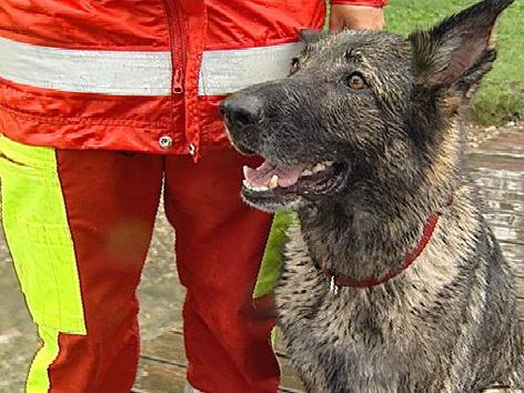 Rettungshund sitzt neben Rettungs-Hundestaffel-Führer
