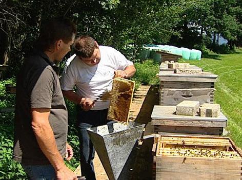 Bienen, Honig, Imker