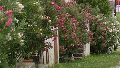 schatzkiste oleander burgenland heute. Black Bedroom Furniture Sets. Home Design Ideas