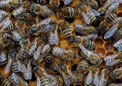 Warme Winter Gefahrden Steirische Bienenvolker Steiermark Orf At
