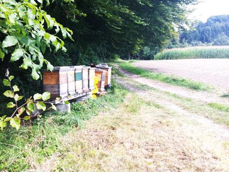 Die Bienenstöcke, an denen der Jogger vorbeilief