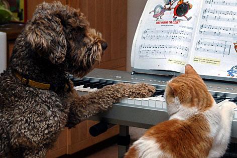 Kennenlernen hund und katze