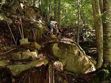 Geotrail; Gailtal, Versteinerte Bäume