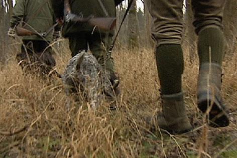 Jäger Jagd Wald jagen