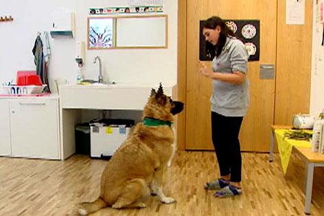 Sprechen lernen mit Therapiehunden in Kramsach