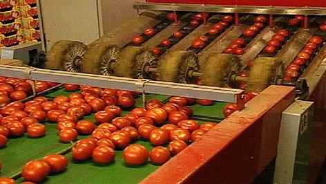 Gemüse aus dem Seewinkel