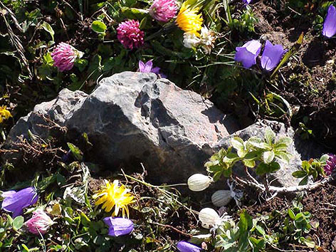 Aschenstein auf einer Almwiese