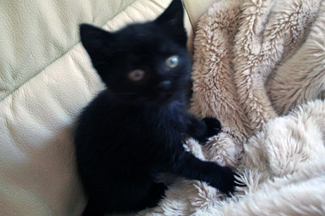 Schwarze Katze WeiГџer Kater Stream