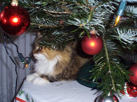 Gefahrliche Weihnachtsdeko Fur Katzen Radio Burgenland