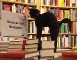 Katzendame streckt sich in der Buchhandlung Heyn