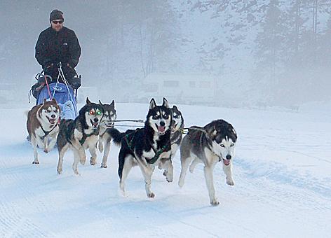 Husky Schlittenhunde Huskies Musher Neukirchen Wildkogel Longtrail Hundeschlittenrennen Schlittenhunderennen
