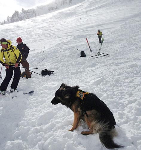 Lawine Suchhunde Lawinensuchhund Rettung Bergrettung Grünsee Weißsee
