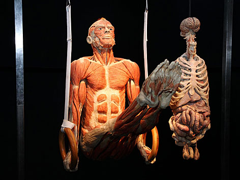 """Plastinierte Leiche beim Ringturnen in der """"Körperwelten""""-Ausstellung im NHM"""