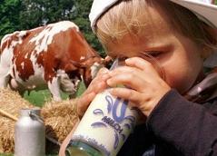 Kind, das Milch aus einem Glas trinkt, Kuh im Hintergrund