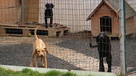 Nina Stern herzt Hundewelpen
