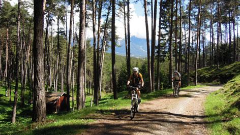 Zwei Radfhahrer im Wald