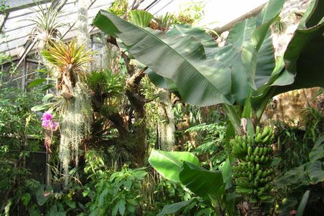 Tropische Pflanzen im Botanischen Gartens
