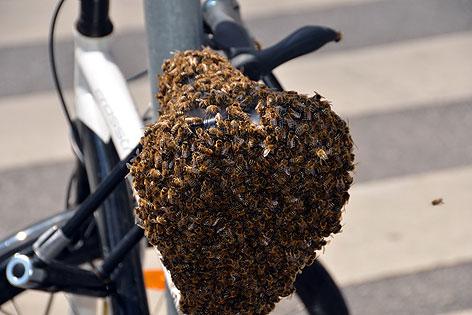 Bienen auf Fahrradsattel