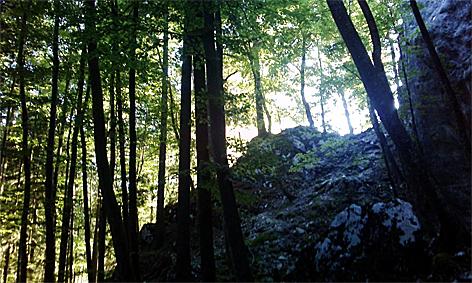 Wald Laubwald Mischwald Bäume Bergwald Bergwälder Forstwirtschaft Baum Holzwirtschaft Wälder