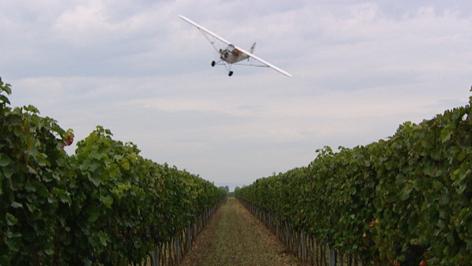 Starfighter fliegt über Weingarten