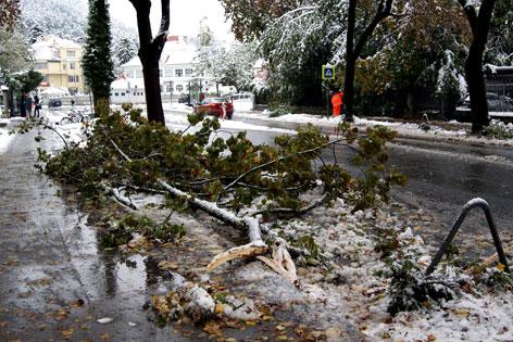 umgestürzte Bäume im Saggen
