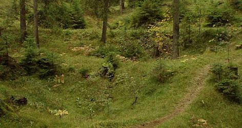 Verwachsene Dolinen im Wald